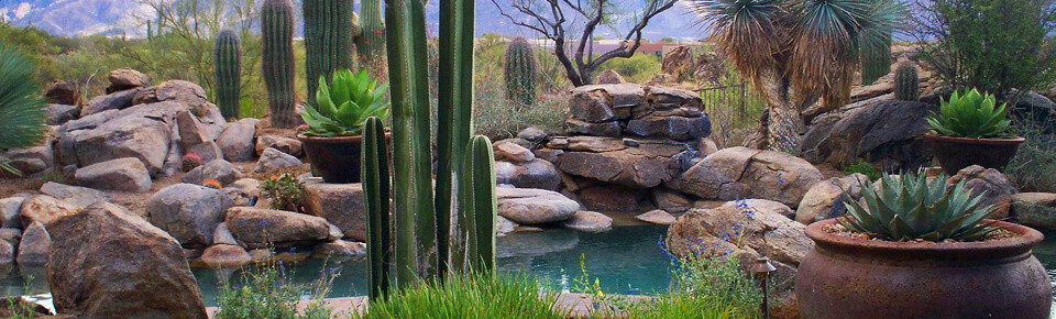 Tucson landscaping resources