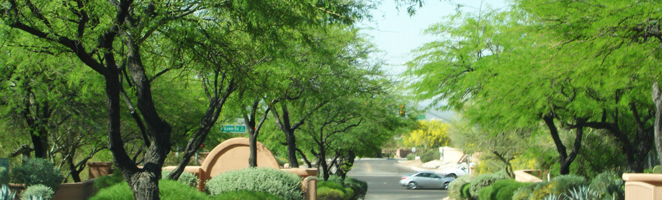 Tree Services in Tucson
