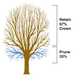 crown raising