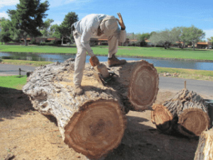 qualified tree cutting