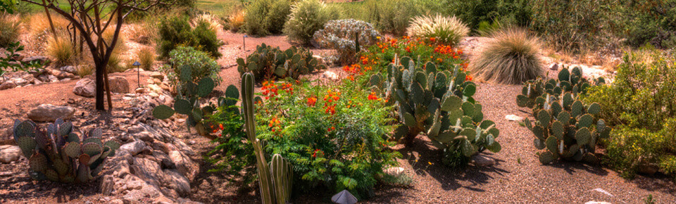 Tucson weed control