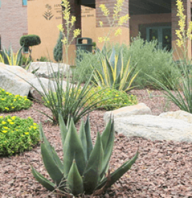 commercial landscaping in tucson az horticulture unlimited