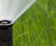 Tips for Reducing Water Use in Your Backyard
