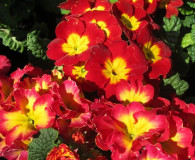 Gardening Tip of the Month: Use Annuals and Perennials to add Seasonal Color