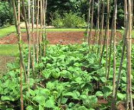 Preparing and Planting a Vegetable Garden