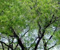 What Are the Best Trees to Plant in Tucson?