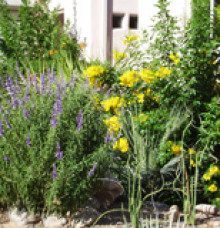 Landscape Maintenance in Tucson