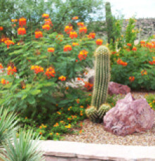 Landscape Installation in Tucson