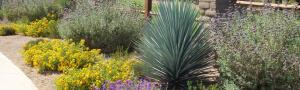 Landscape installation in Tucson