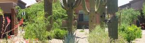 Tucson commercial landscape work
