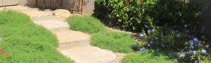 Tucson ground cover plants