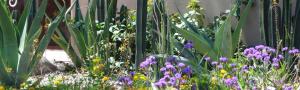 Tucson landscape maintenance