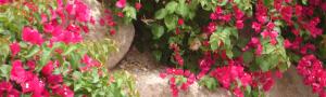 Tucson vines