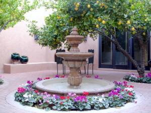 Desert landscaping in the summer-24